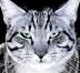 catgreeneyes2.jpg
