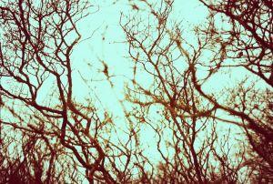 robintree.jpg
